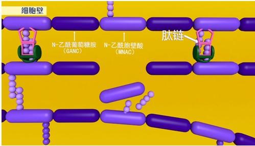 【动画直播】《药二》药物机制记不住?8月22日起动画视频帮你记!