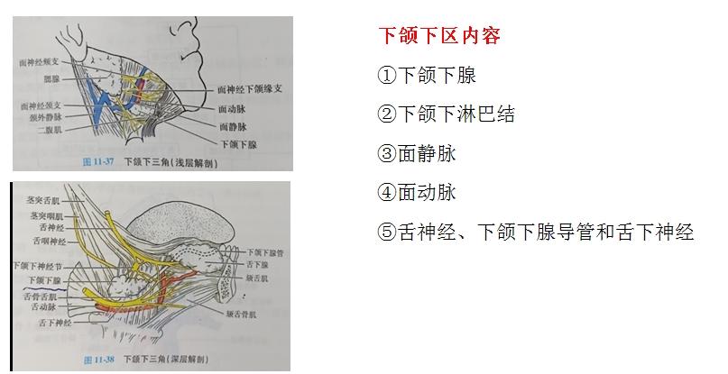 口腔解剖生理学考点3