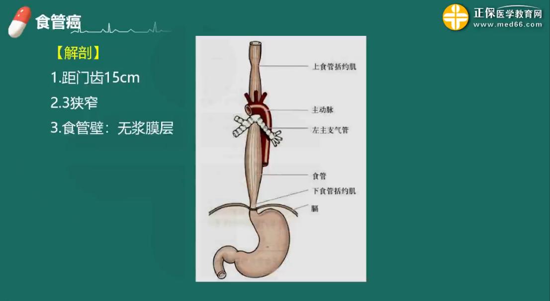 【护理辅导】食道癌的病因病理&临床表现